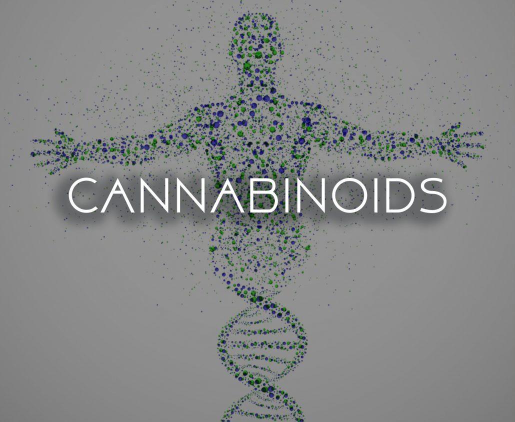what is cannabinoid system cbd hemp