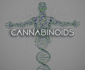 what is cannabinoid system cbd hemp